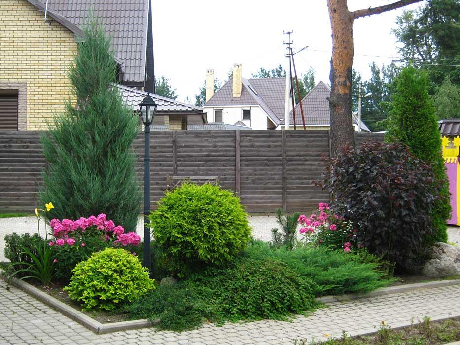 Хвойники в ландшафтном дизайне вдоль дома